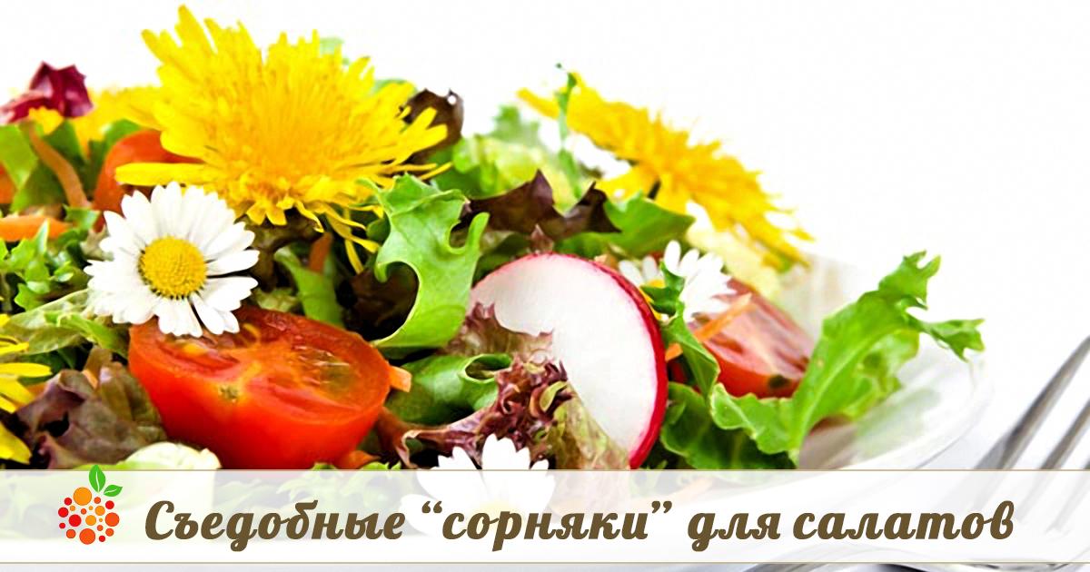 Лазанья с фаршем рецепт в домашних условиях простой рецепт